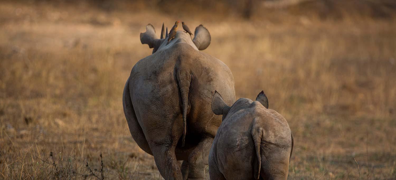 world rhino day 2019